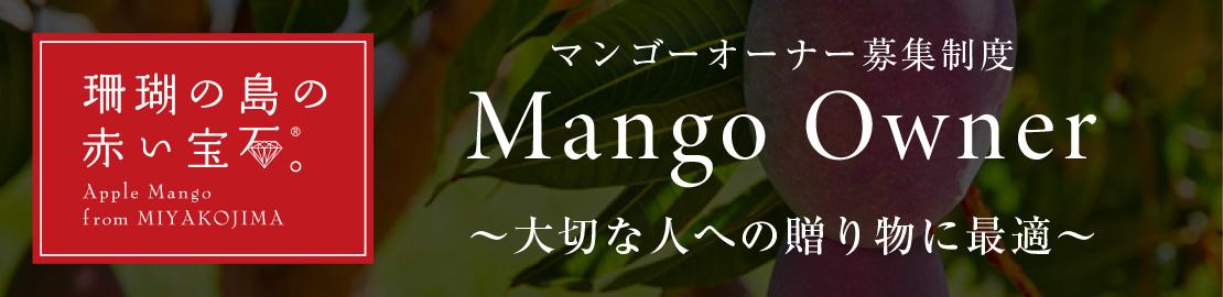 宮古島の完熟マンゴー